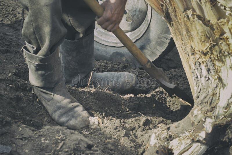 Человек работает как лопаткоулавливатель, выкапывает вне большой пень стоковое фото