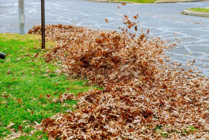 Человек работая сверхмощную воздуходувку лист: листья завихряются вверх по и зарево в приятном солнечном свете стоковая фотография
