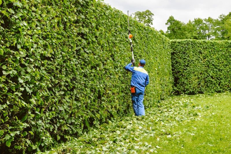 Человек режет деревья в парке Профессиональный садовник в равномерные кусты отрезков с клиперами Подрезая сад, изгородь Работник стоковые изображения