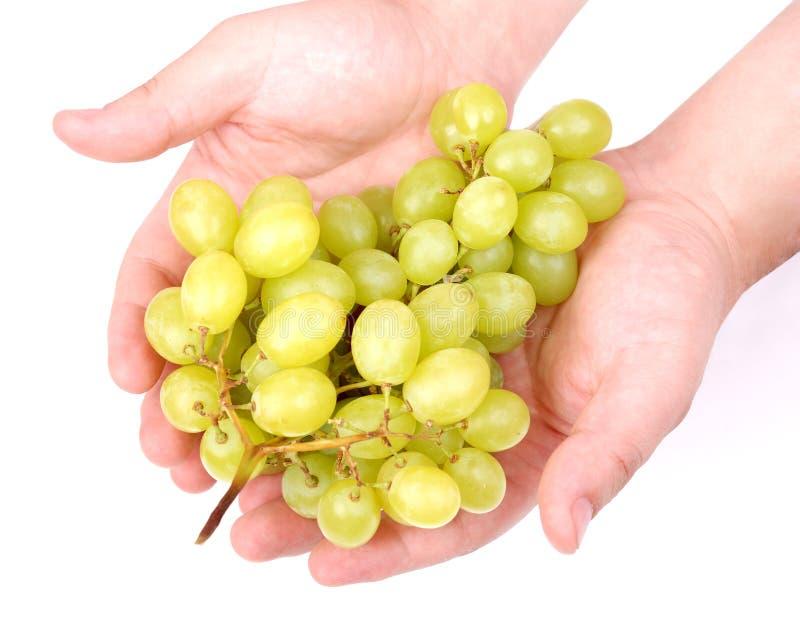 человек рук виноградин пука стоковое изображение rf