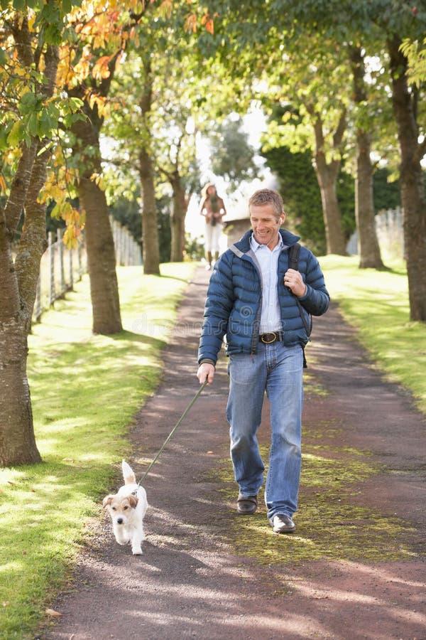 человек собаки осени outdoors паркует гулять стоковые фото