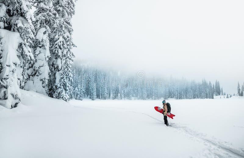 Человек стоит со сноубордом рядом с тяжело снежным лесом в туманной погоде стоковые фотографии rf