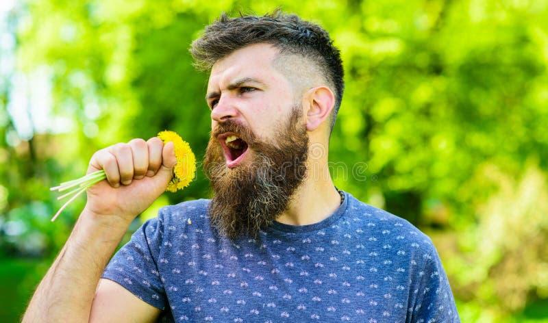 Человек с бородой и усиком на счастливой стороне держит букет одуванчиков как микрофон Битник сделал букет, зеленую природу стоковые фото
