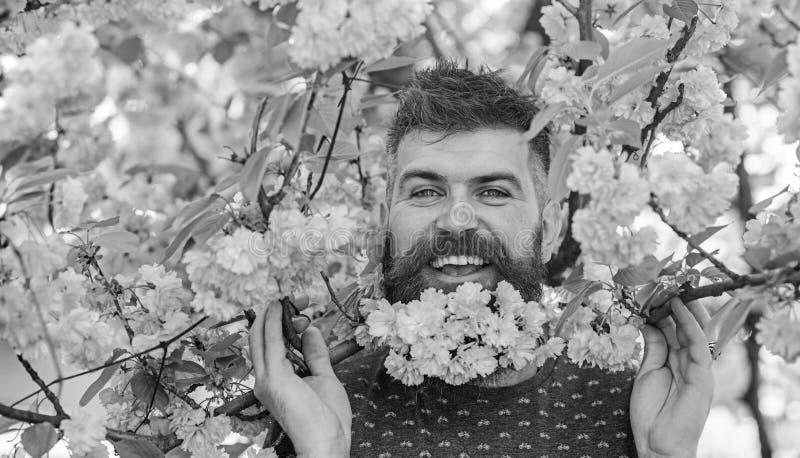 Человек с бородой и усик на счастливой стороне около ветвей с нежными розовыми цветками : стоковые фотографии rf