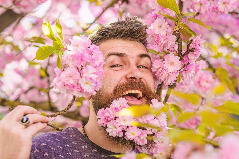 Человек с бородой и усик на счастливой стороне около нежных розовых цветков Битник с цветением Сакуры в бороде Нежность стоковое фото rf