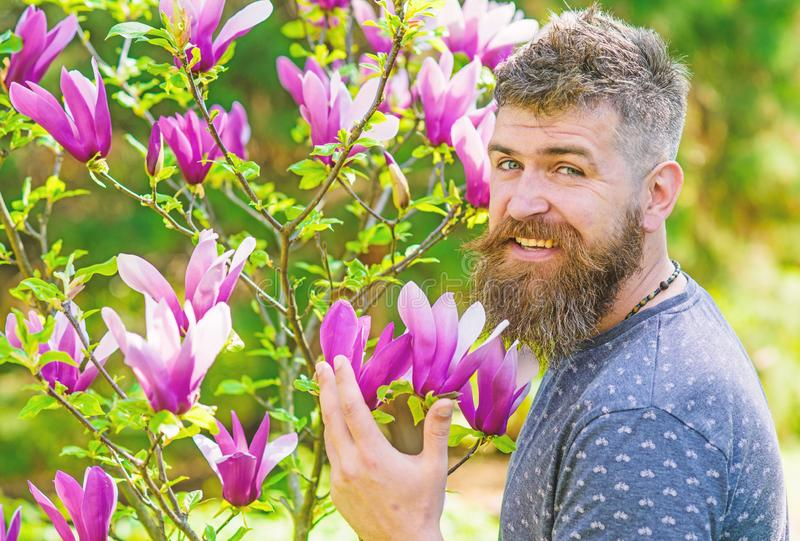 Человек с бородой и усик на счастливый усмехаться смотрят на около цветков на солнечный день Бородатый человек при свежая стрижка стоковые изображения rf