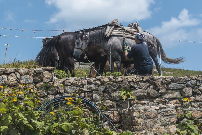 Человек с его лошадями горы на хате Eho Лошади служат транспортировать поставки от и к хаты стоковая фотография