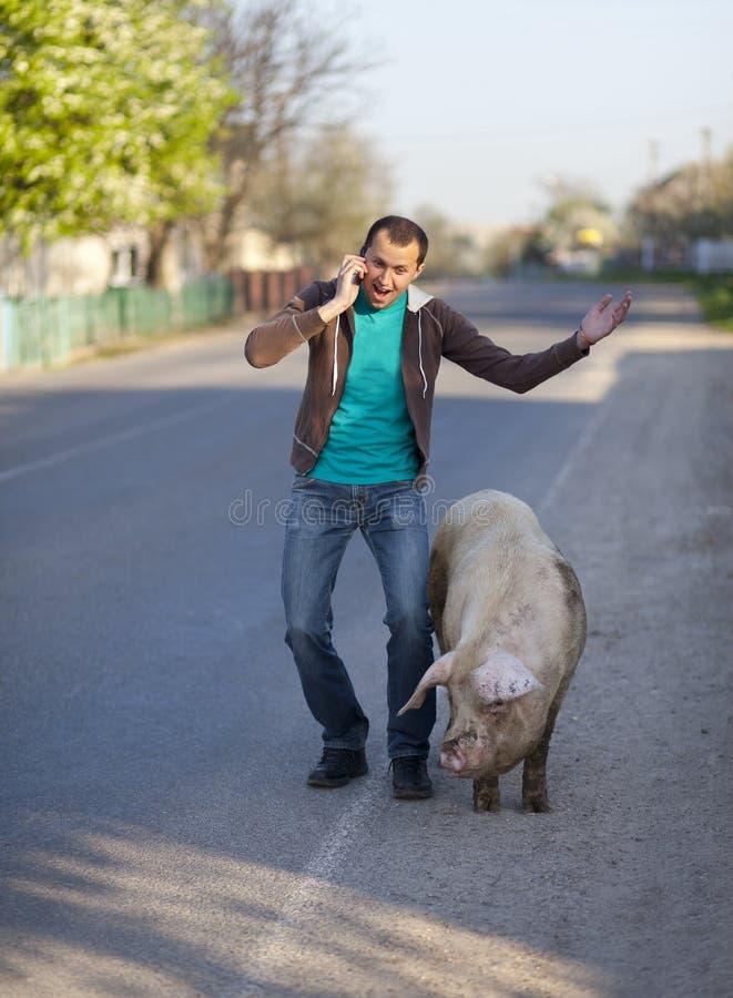 Человек с пакостной свиньей стоковое изображение