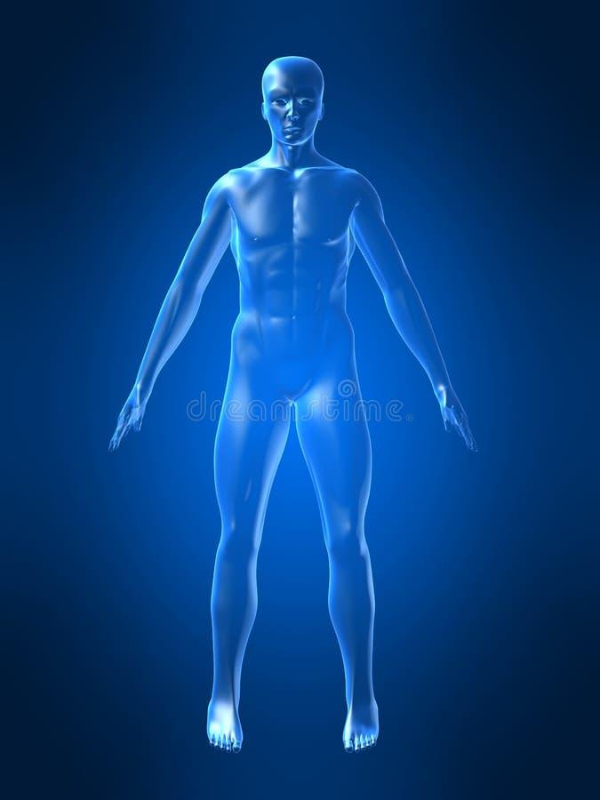 человек тела иллюстрация штока