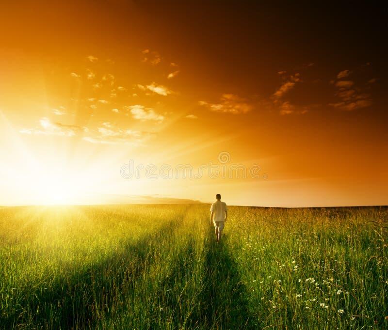 человек травы поля одно лето стоковое изображение