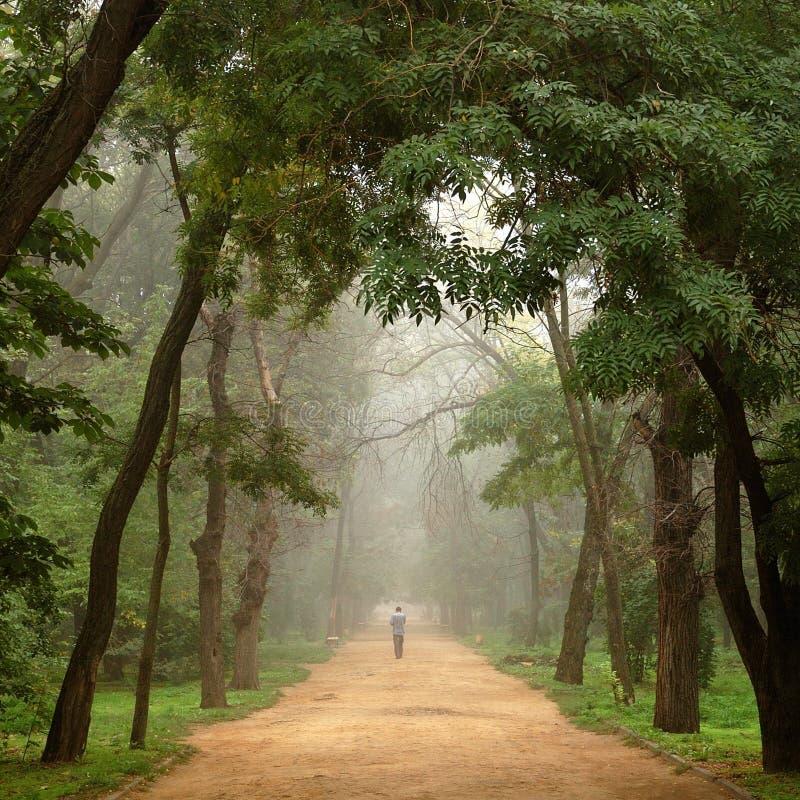 человек тумана стоковая фотография