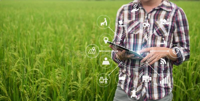 Человек фермера технологии земледелия используя планшет стоковые изображения rf