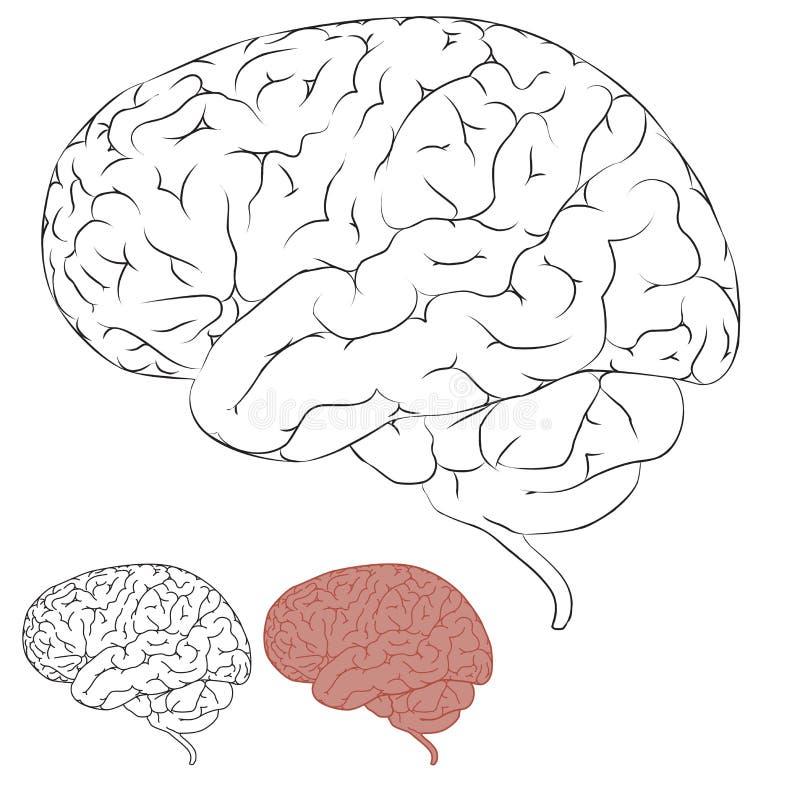 человек чертежа мозга бесплатная иллюстрация