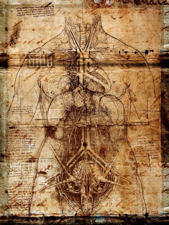 человек иллюстрация штока