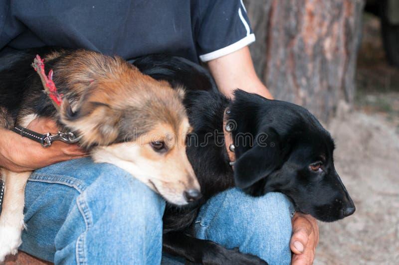 Человек sittting и держа 2 собак snuggled до одина другого в лесе стоковая фотография rf