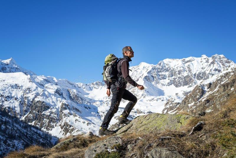 Человек trekking в Альпах Грандиозный национальный парк Paradiso Италия стоковое фото
