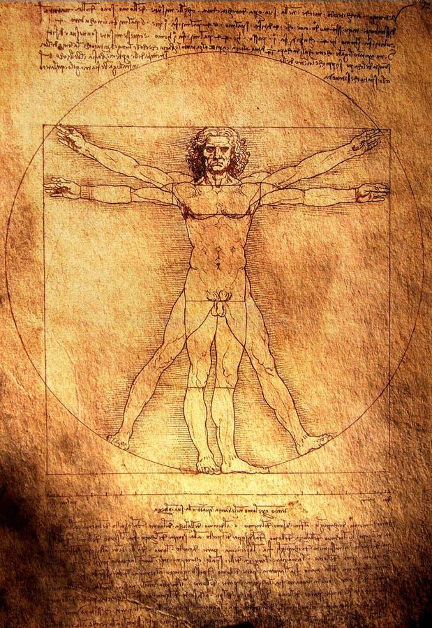 человек vitruvian иллюстрация штока