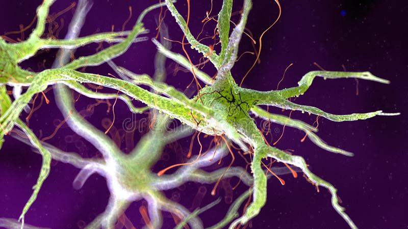 Человеческая нервная клетка иллюстрация штока