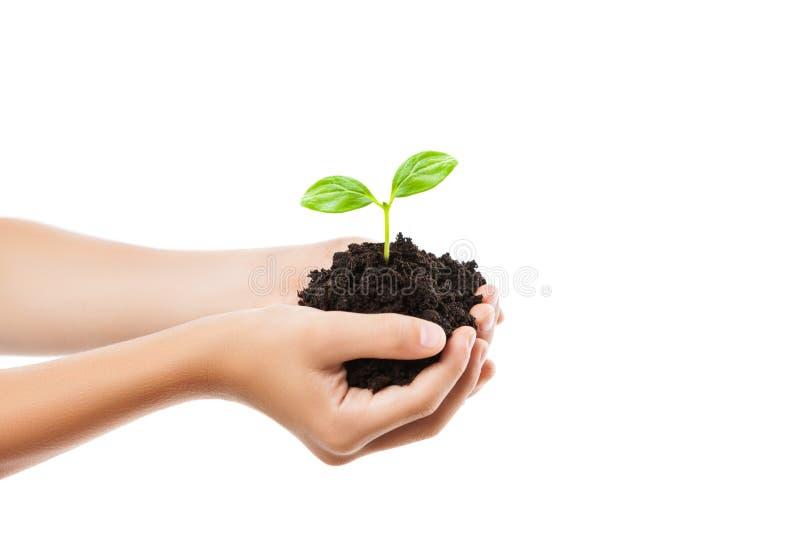 Человеческая рука держа зеленый рост лист ростка на почве грязи стоковое изображение