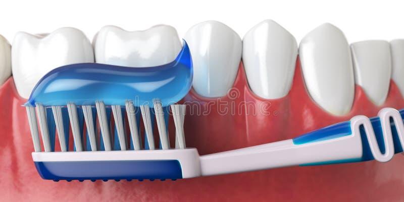 Человеческие зубы и зубная щетка с зубной пастой белизна зуба здоровой гигиены принципиальной схемы пузыря устная защитная иллюстрация вектора