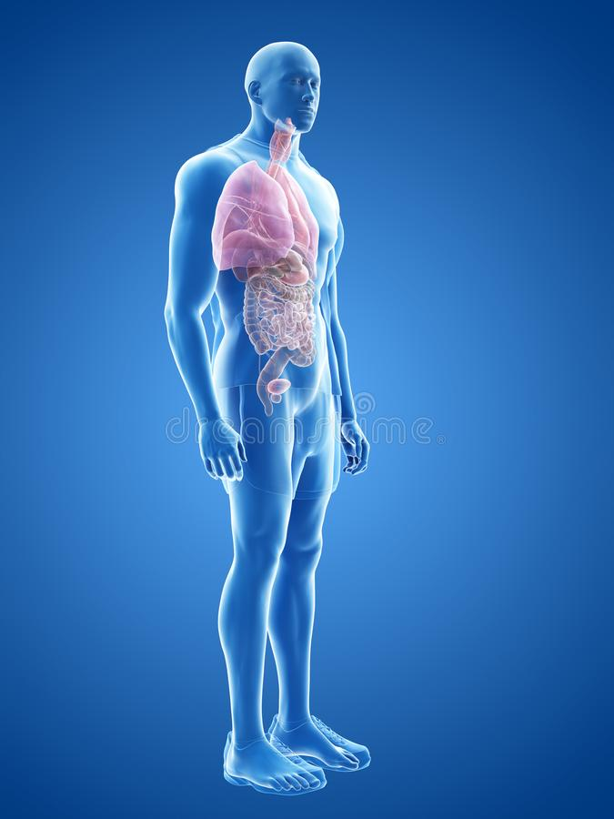 Человеческие органы иллюстрация вектора