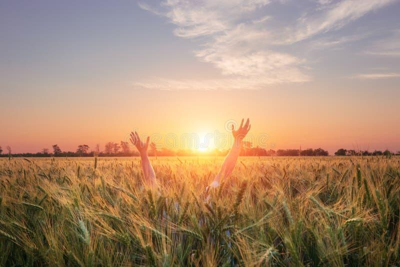 Человеческие руки достигают для солнца стоковые изображения rf