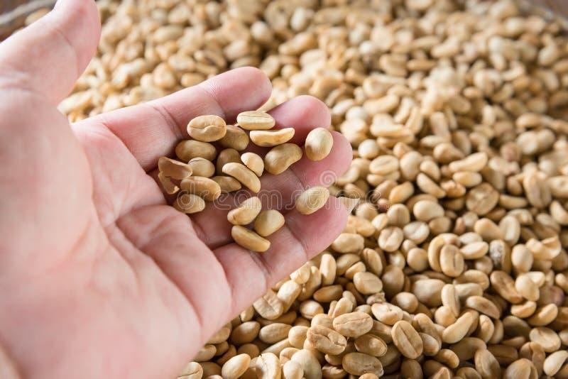 Человеческие руки лить сухие кофейные зерна стоковое изображение
