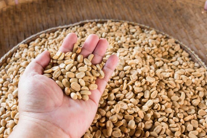 Человеческие руки лить сухие кофейные зерна стоковые изображения