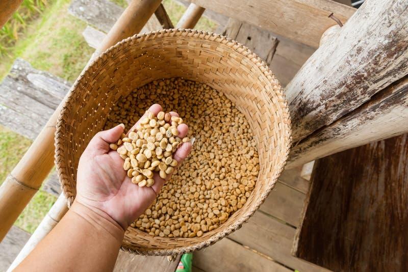 Человеческие руки лить сухие кофейные зерна стоковая фотография rf