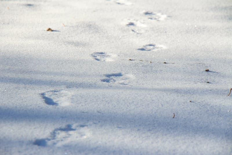 Человеческие следы ноги на чистом белом снеге в зиме стоковые изображения