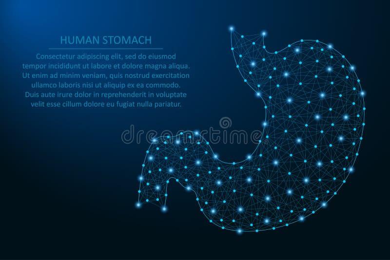 Человеческий живот, здоровый человеческий внутренний орган пищеварения сделанный пунктами и линии, полигональная сетка wireframe, иллюстрация штока