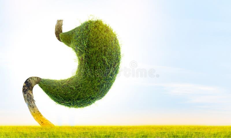 Человеческий живот силен Внутренние органы сформированы зелеными деревьями environment бесплатная иллюстрация