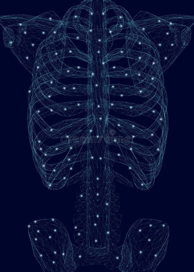 Человеческий торакс Полигональное wireframe человеческого скелета сделанного голубых линий на темной предпосылке r бесплатная иллюстрация