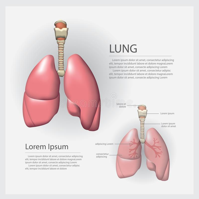 Человеческое легкий анатомии с деталью иллюстрация штока
