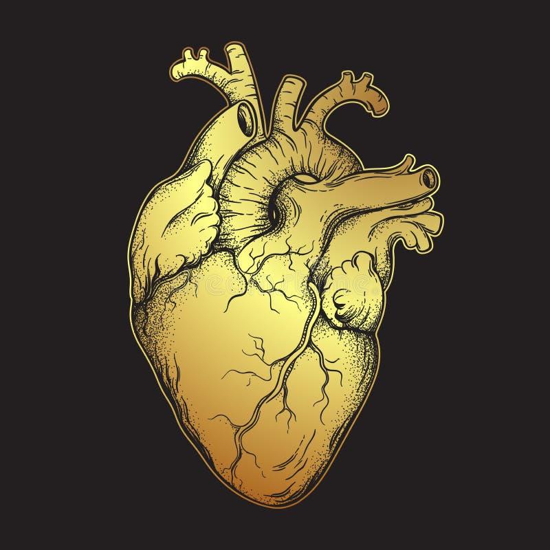 Человеческое сердце золота Анатомически правильной линия нарисованная рукой искусство и вспышка dotwork татуируют или печатают ил иллюстрация штока
