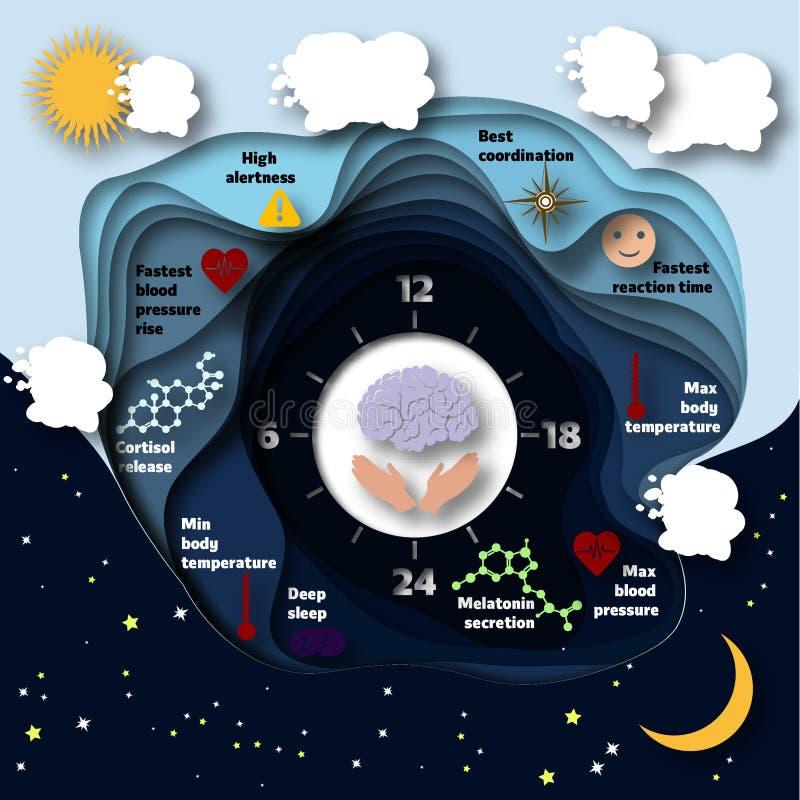 Человеческое infographics биологических часов иллюстрация штока
