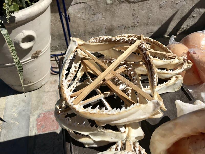 Челюсти акулы для продажи в магазине стоковая фотография