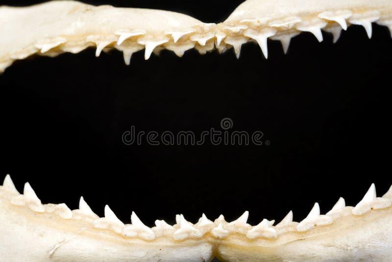 челюсти рамки стоковое фото