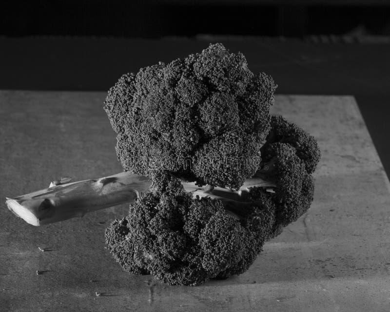 Черенок брокколи стоковое фото