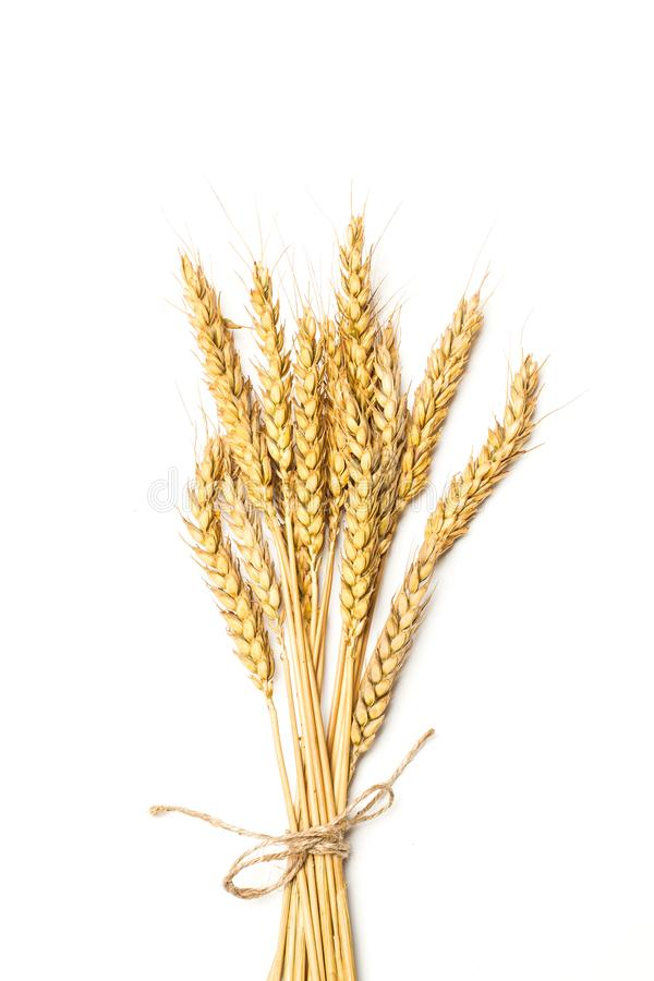 Черенок пшеницы в взгляде стоковые фото
