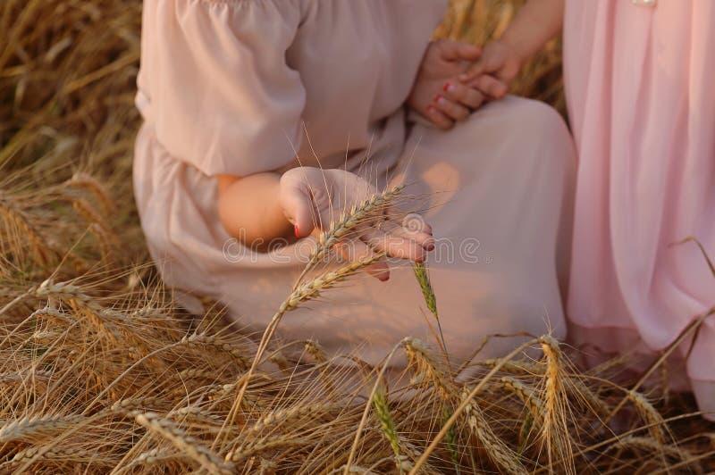 Черенок пшеницы руки женщины касающее золотистый свет стоковое изображение rf