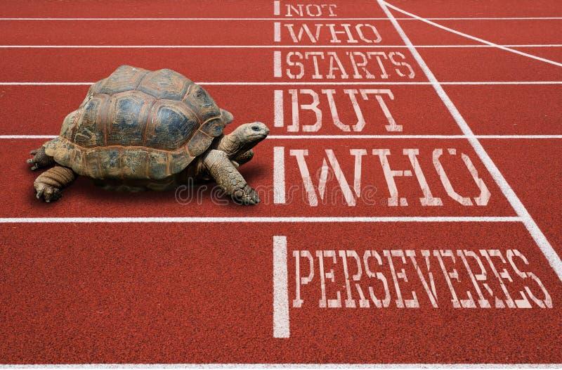 Черепаха бежать цитата атлетического следа мотивационная стоковые изображения