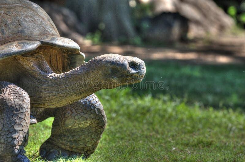 Черепаха в зоопарке Оклахома-Сити стоковая фотография rf