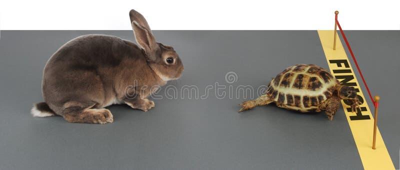 черепаха зайцев стоковое фото rf