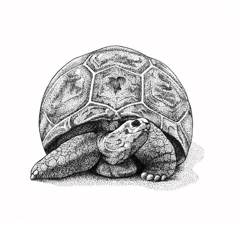 черепаха иллюстрации иллюстрация вектора