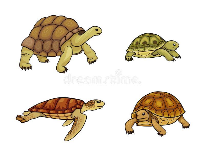 Черепаха и черепаха - иллюстрация вектора иллюстрация штока