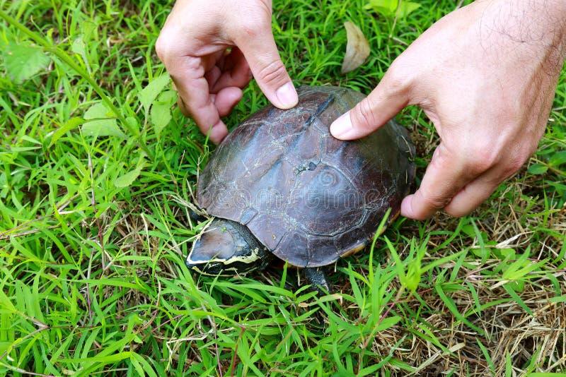 Черепаха идя на траву стоковые изображения