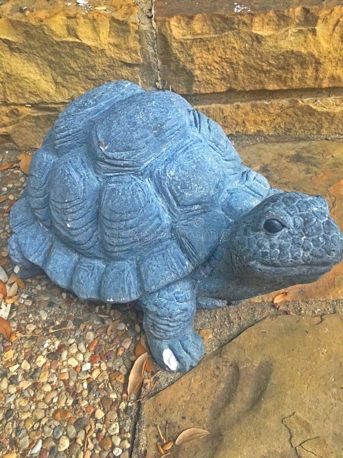 Черепаха которая повернула к камню стоковое изображение rf