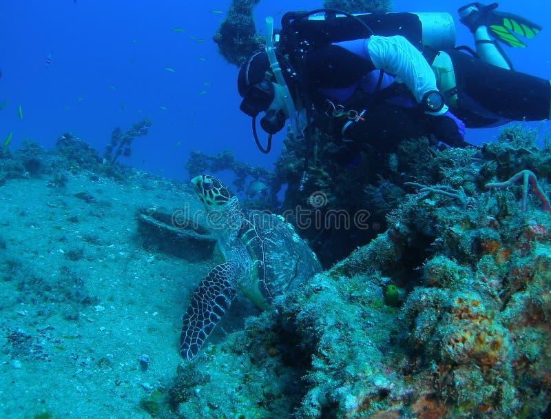 черепаха моря водолаза стоковое изображение rf