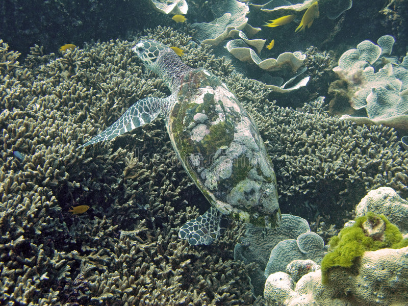 черепаха моря стоковая фотография rf